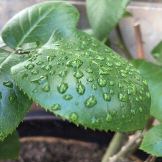 Fertilizantes líquidos